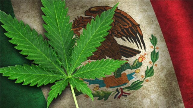 Mexico Declares Marijuana Use a Fundamental Human Right